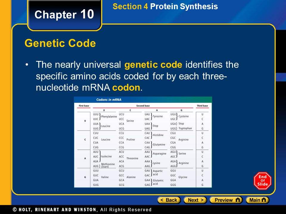 Section 4 Protein Synthesis