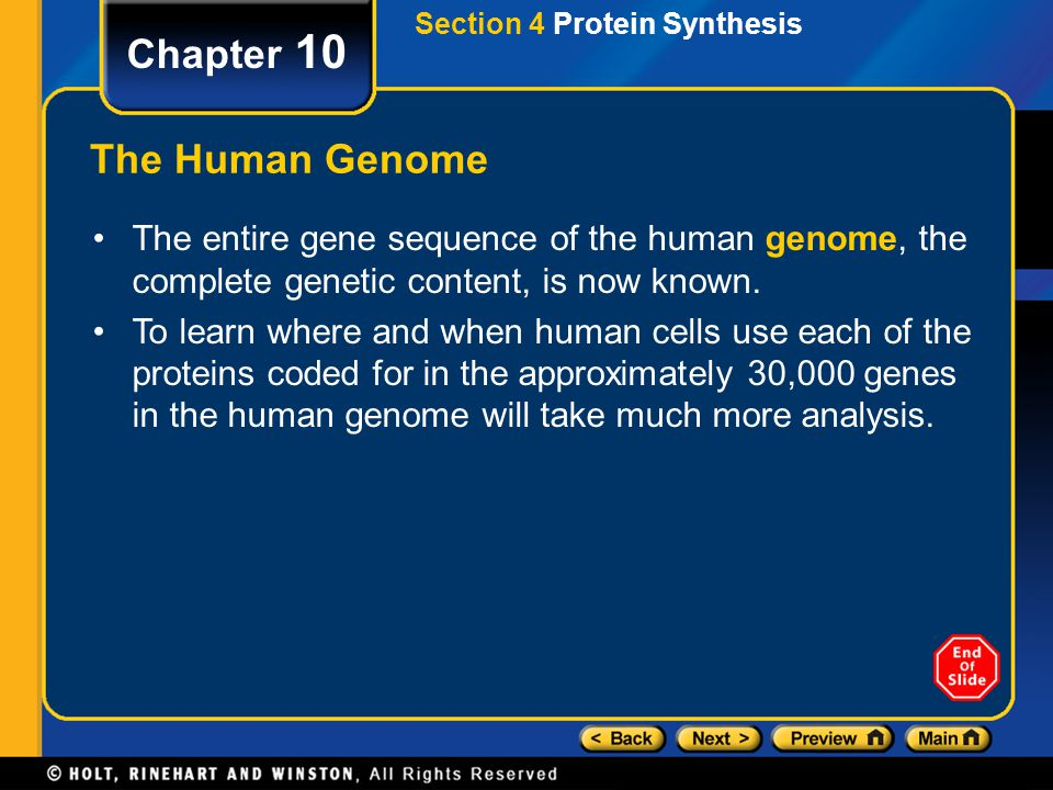 Chapter 10 The Human Genome