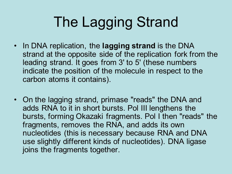 The Lagging Strand