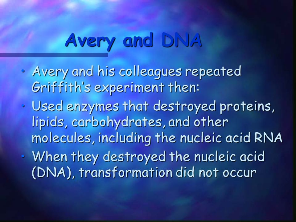 Avery and DNA Avery and his colleagues repeated Griffith's experiment then: