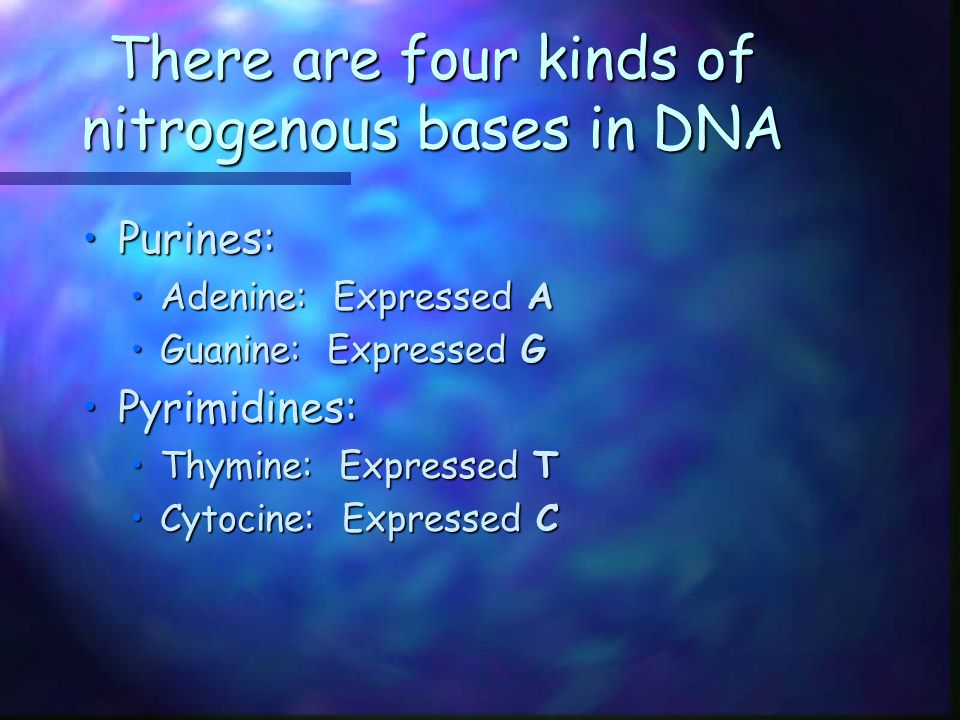 There are four kinds of nitrogenous bases in DNA