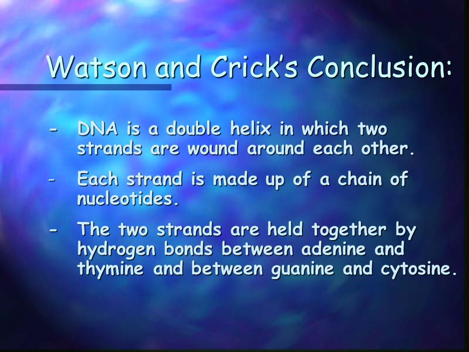 Watson and Crick's Conclusion: