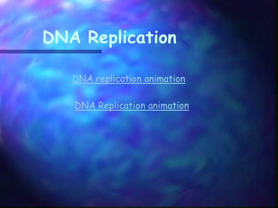 DNA Replication DNA replication animation DNA Replication animation