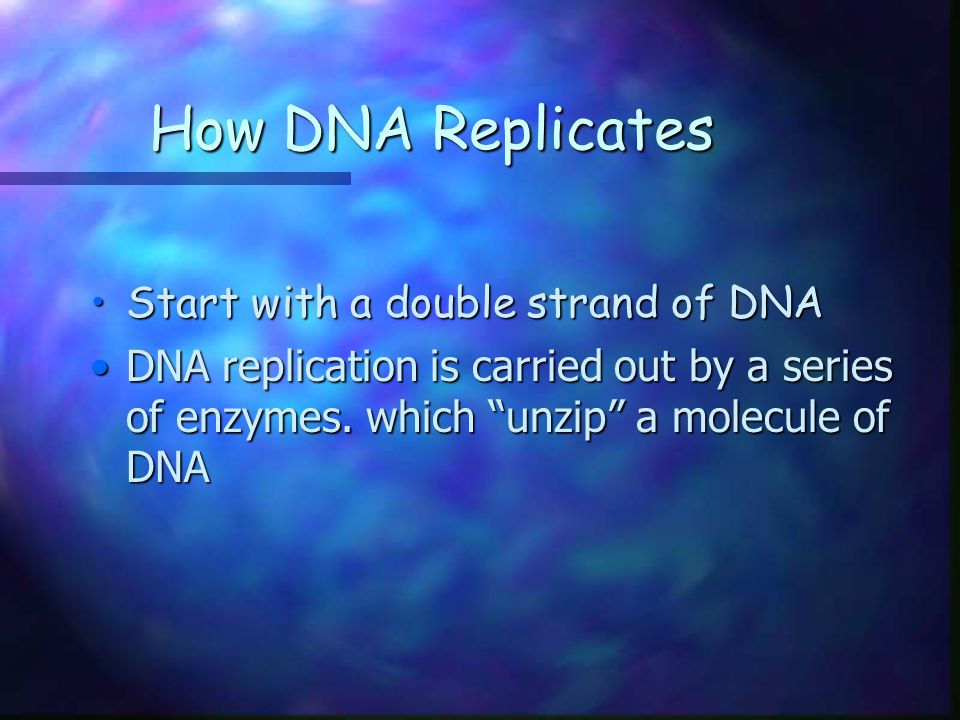 How DNA Replicates Start with a double strand of DNA