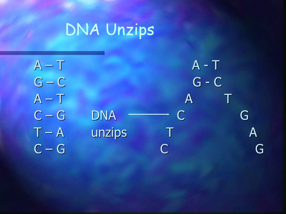 DNA Unzips A – T A - T G – C G - C A – T A T C – G DNA C G