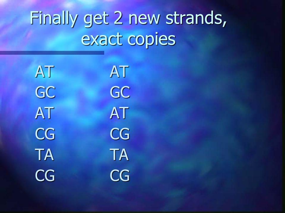 Finally get 2 new strands, exact copies