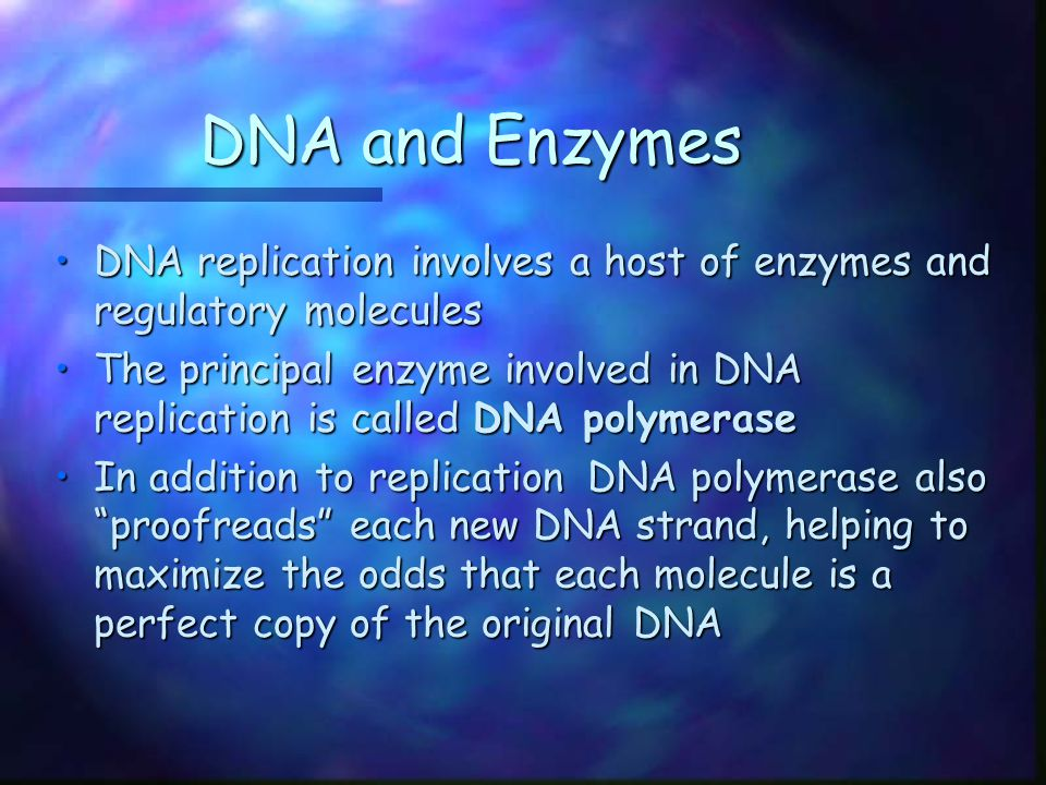 DNA and Enzymes DNA replication involves a host of enzymes and regulatory molecules.