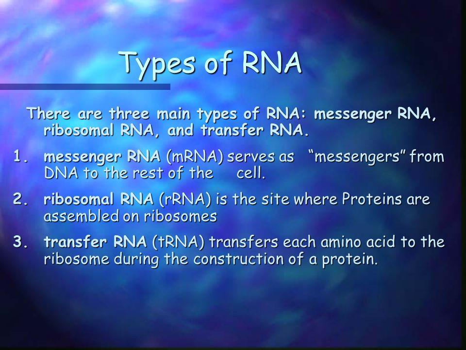 Types of RNA There are three main types of RNA: messenger RNA, ribosomal RNA, and transfer RNA.