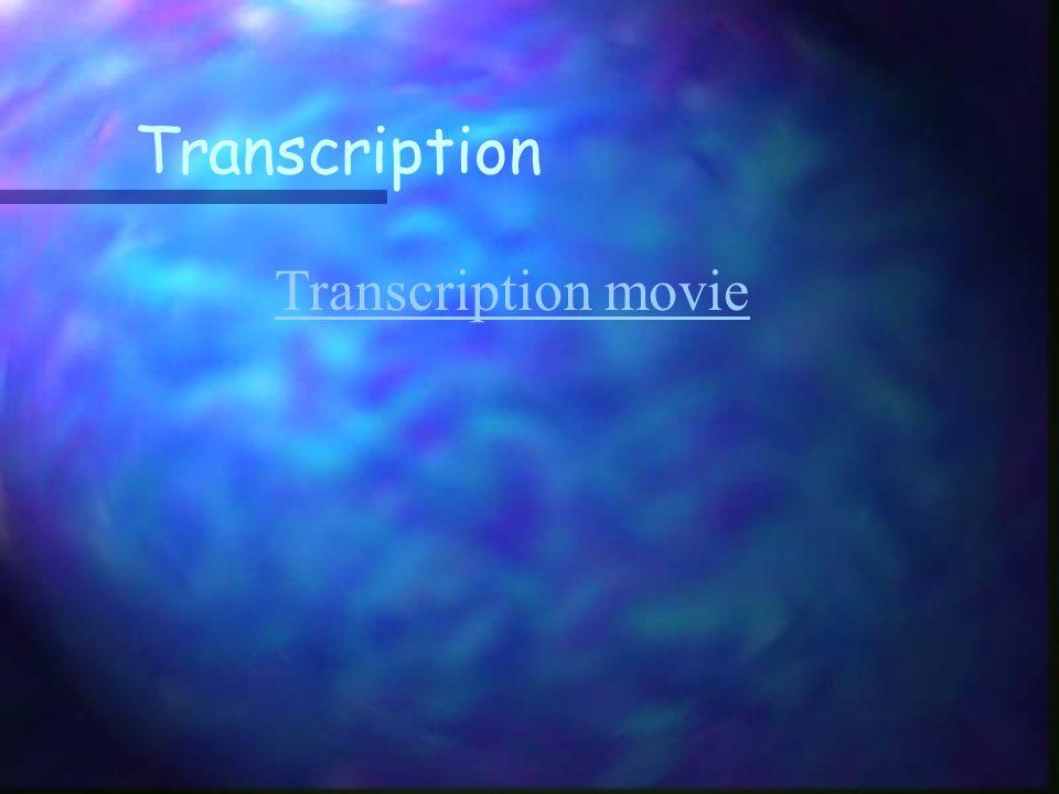 Transcription Transcription movie
