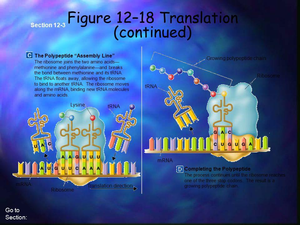 Figure 12–18 Translation (continued)