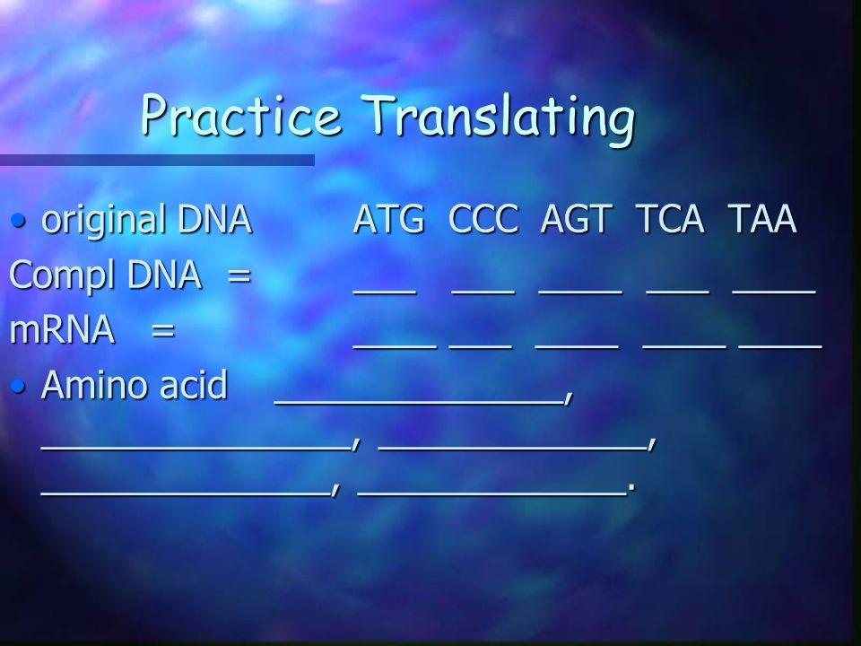 Practice Translating original DNA ATG CCC AGT TCA TAA