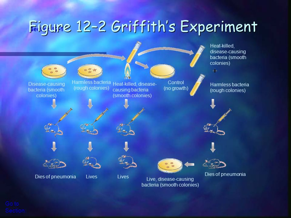 Figure 12–2 Griffith's Experiment