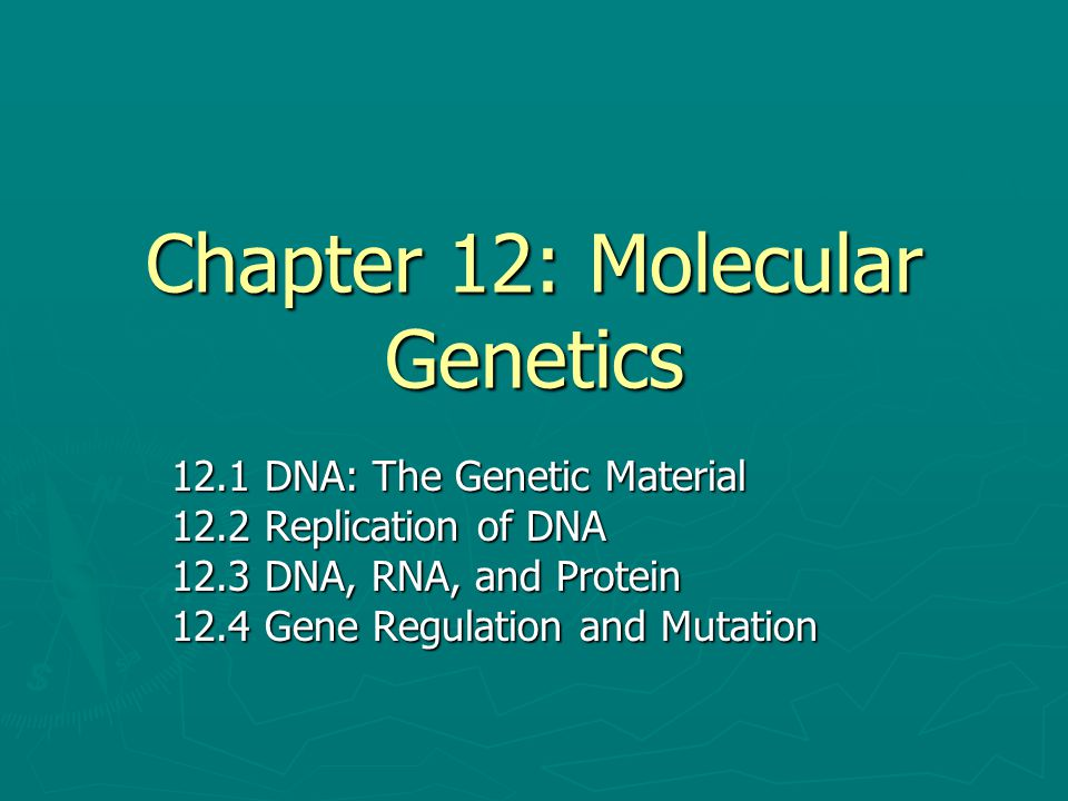 Chapter 12: Molecular Genetics