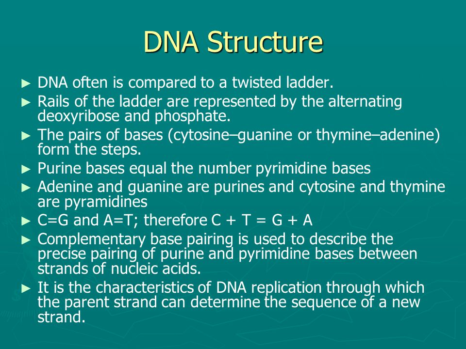 DNA Structure DNA often is compared to a twisted ladder.