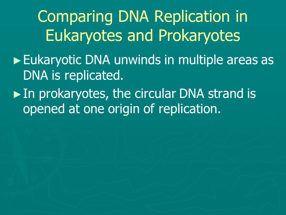 Comparing DNA Replication in Eukaryotes and Prokaryotes