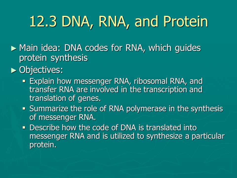 12.3 DNA, RNA, and Protein Main idea: DNA codes for RNA, which guides protein synthesis. Objectives: