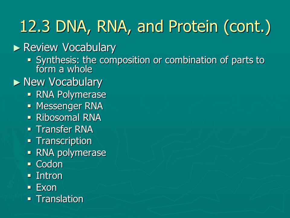 12.3 DNA, RNA, and Protein (cont.)