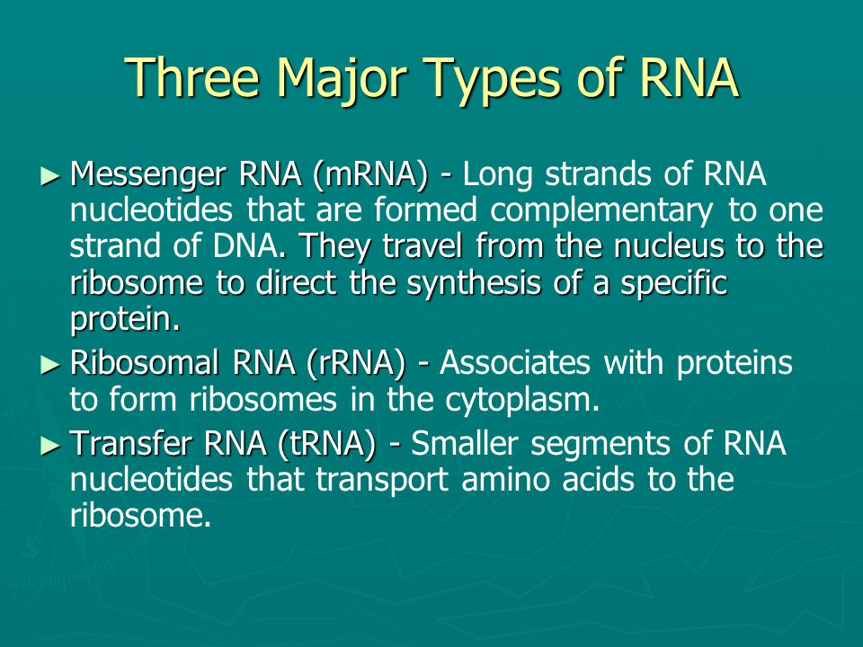 Three Major Types of RNA