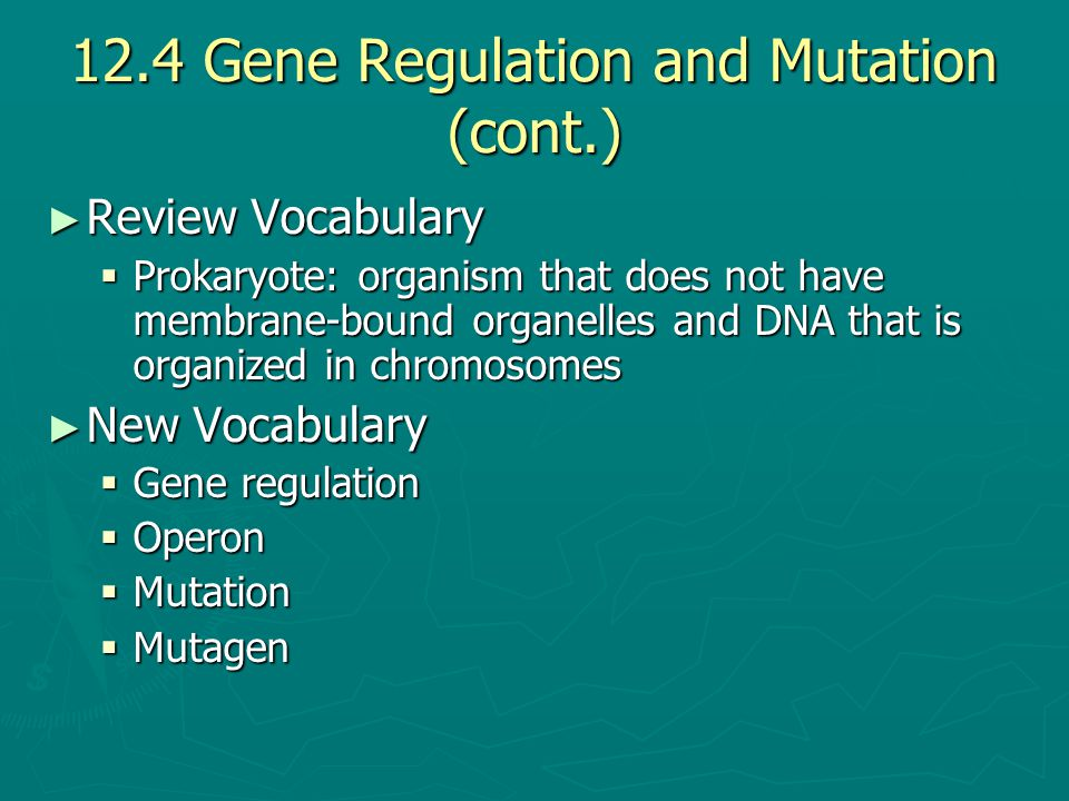 12.4 Gene Regulation and Mutation (cont.)