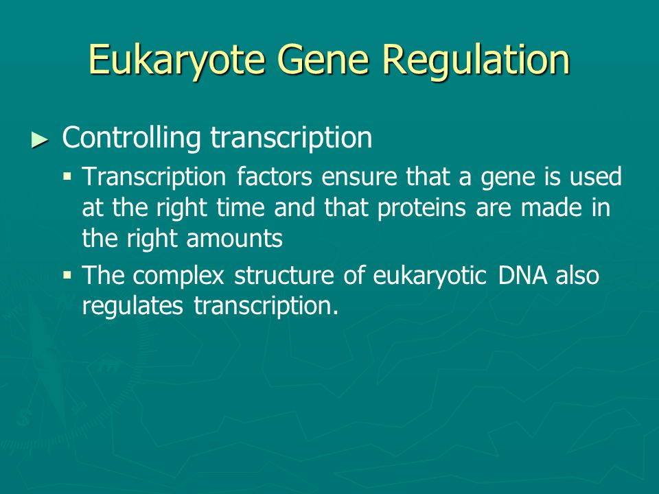 Eukaryote Gene Regulation