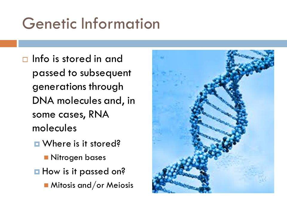 Genetic Information Info is stored in and passed to subsequent generations through DNA molecules and, in some cases, RNA molecules.