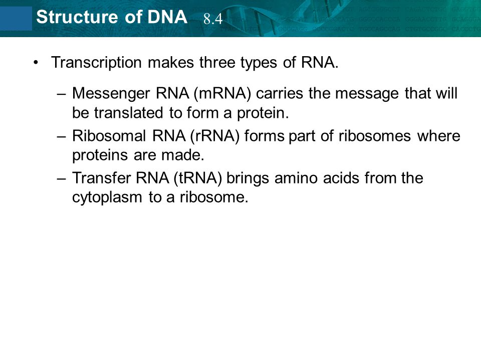 8.4 Transcription makes three types of RNA. Messenger RNA (mRNA) carries the message that will be translated to form a protein.