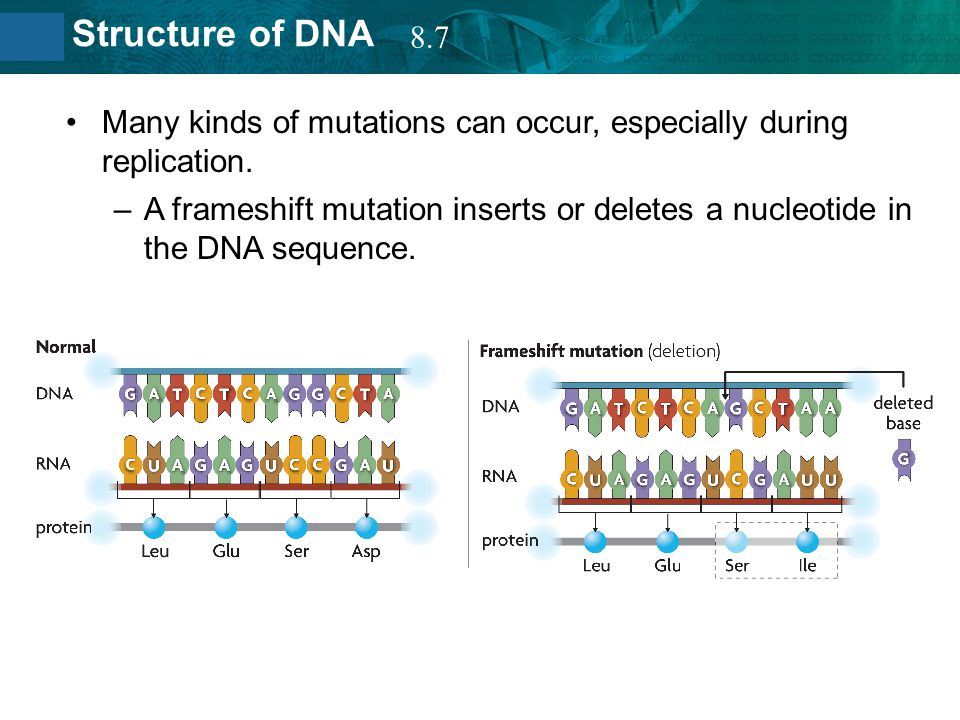 8.7 Many kinds of mutations can occur, especially during replication.