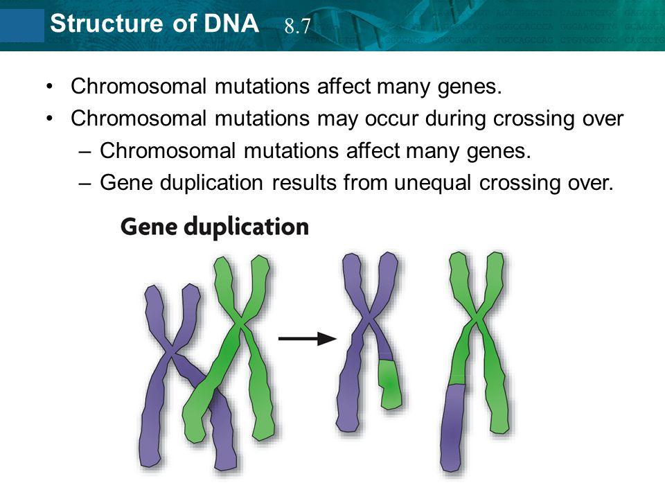 8.7 Chromosomal mutations affect many genes. Chromosomal mutations may occur during crossing over.