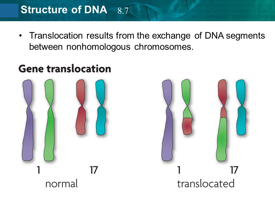 8.7 Translocation results from the exchange of DNA segments between nonhomologous chromosomes.