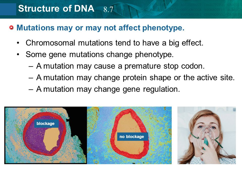 Mutations may or may not affect phenotype.