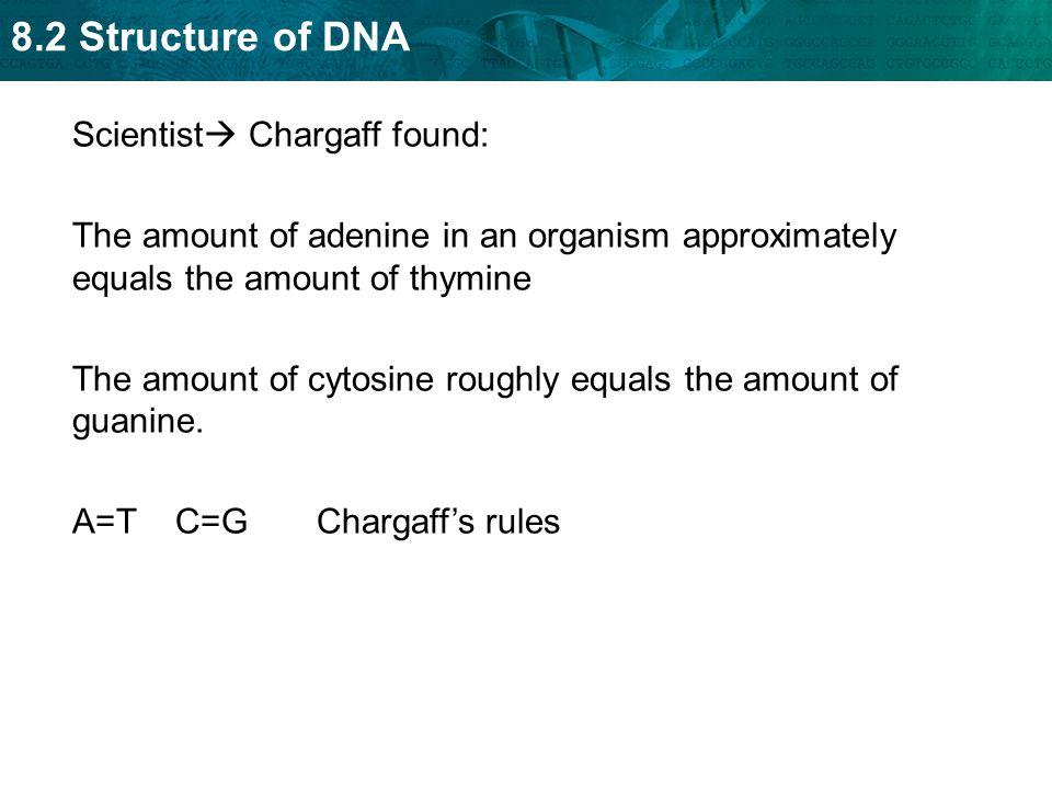 Scientist Chargaff found: