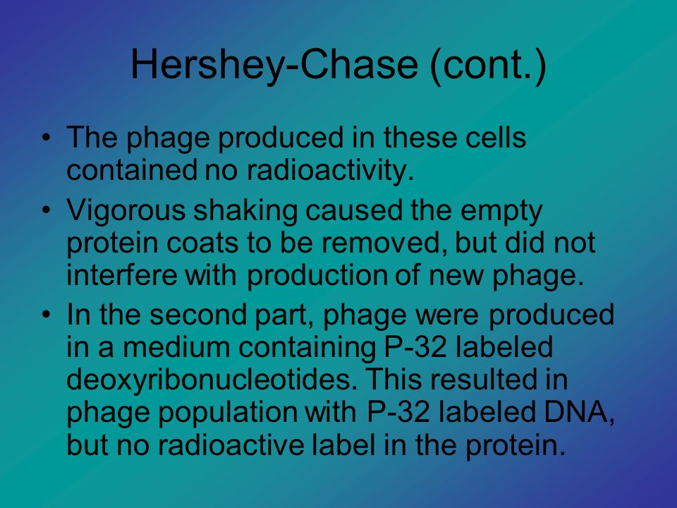 Hershey-Chase (cont.) The phage produced in these cells contained no radioactivity.
