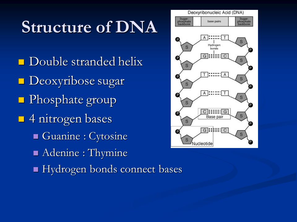 Structure of DNA Double stranded helix Deoxyribose sugar