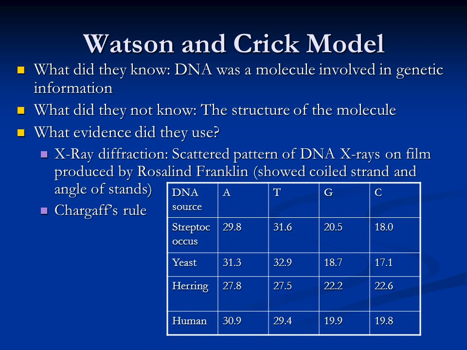 Watson and Crick Model What did they know: DNA was a molecule involved in genetic information. What did they not know: The structure of the molecule.