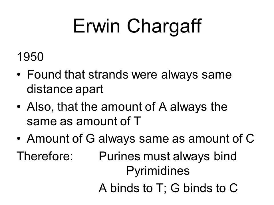 Erwin Chargaff 1950 Found that strands were always same distance apart