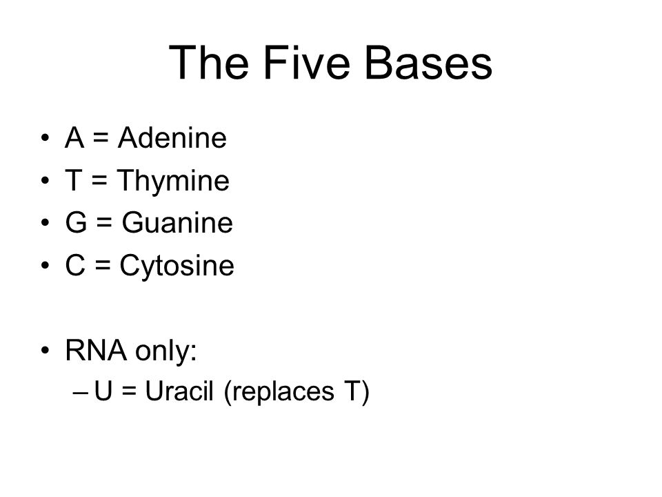 The Five Bases A = Adenine T = Thymine G = Guanine C = Cytosine