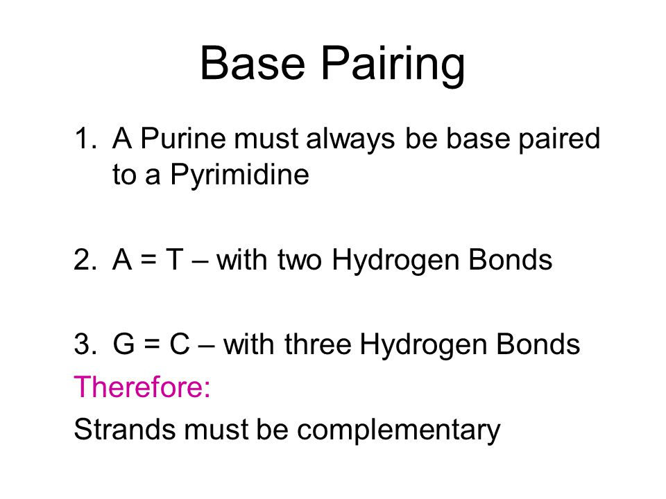 Base Pairing A Purine must always be base paired to a Pyrimidine