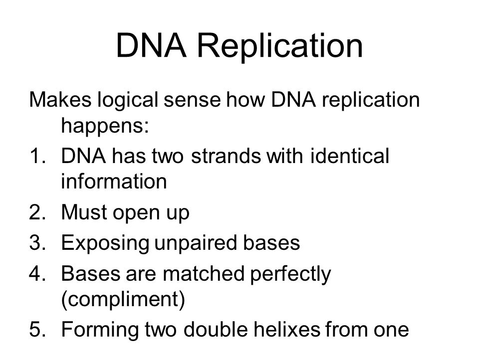 DNA Replication Makes logical sense how DNA replication happens: