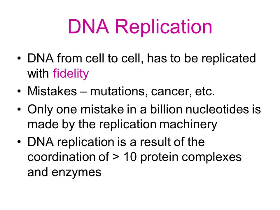 DNA Replication DNA from cell to cell, has to be replicated with fidelity. Mistakes – mutations, cancer, etc.