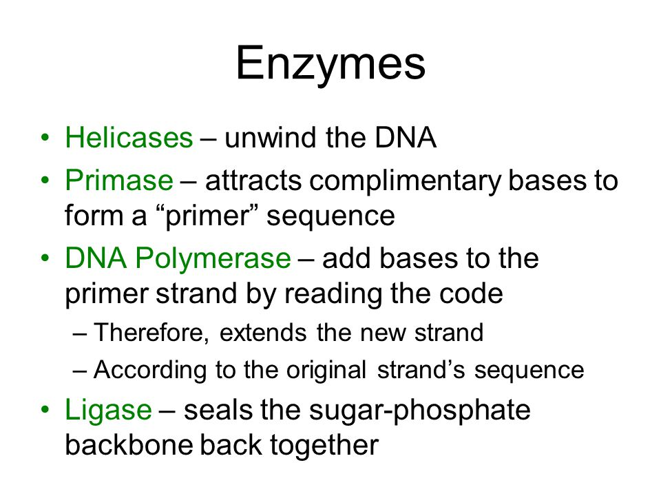 Enzymes Helicases – unwind the DNA