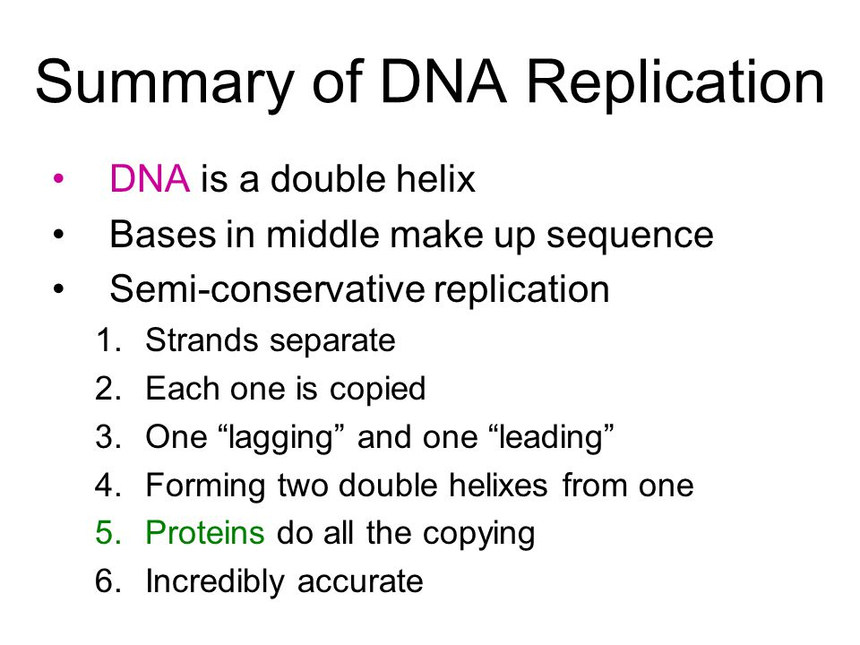 Summary of DNA Replication