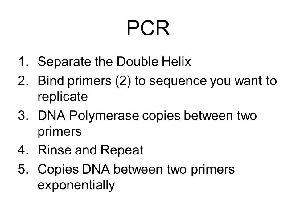 PCR Separate the Double Helix