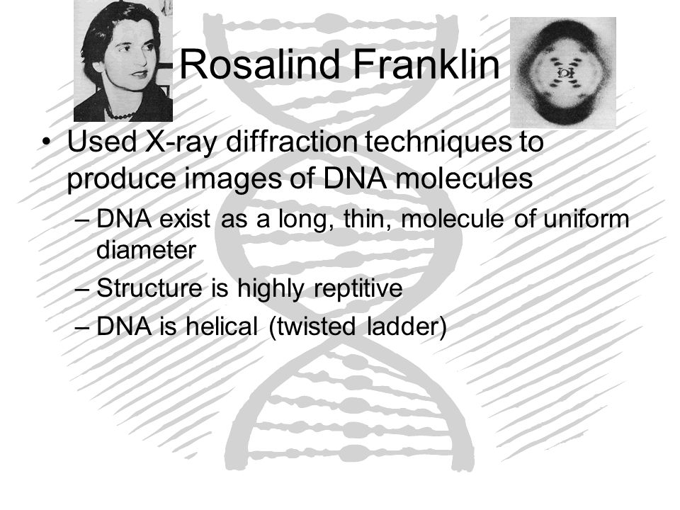 Rosalind Franklin Used X-ray diffraction techniques to produce images of DNA molecules. DNA exist as a long, thin, molecule of uniform diameter.