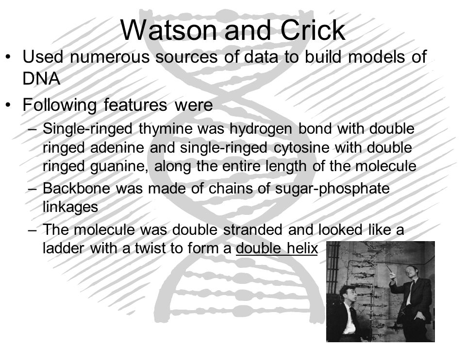 Watson and Crick Used numerous sources of data to build models of DNA