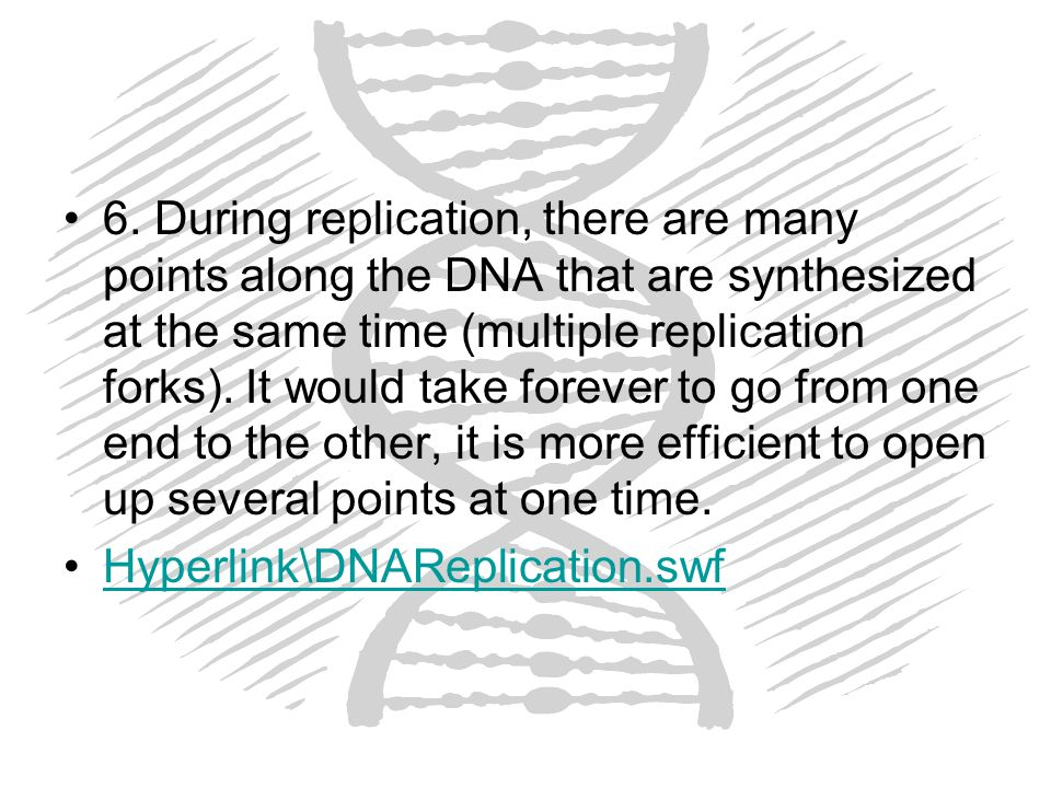6. During replication, there are many points along the DNA that are synthesized at the same time (multiple replication forks). It would take forever to go from one end to the other, it is more efficient to open up several points at one time.
