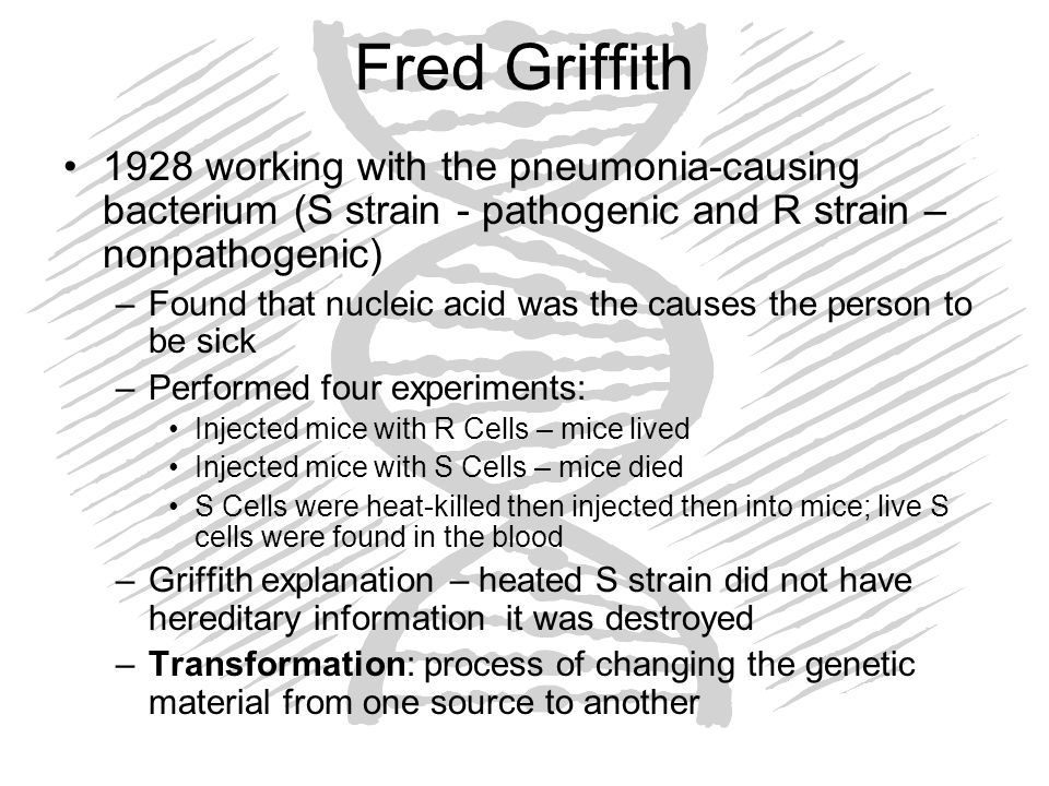 Fred Griffith 1928 working with the pneumonia-causing bacterium (S strain - pathogenic and R strain – nonpathogenic)