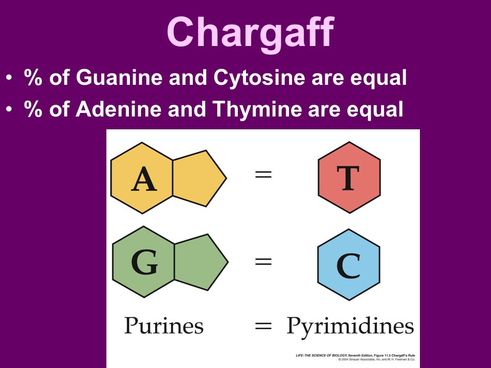 Chargaff % of Guanine and Cytosine are equal