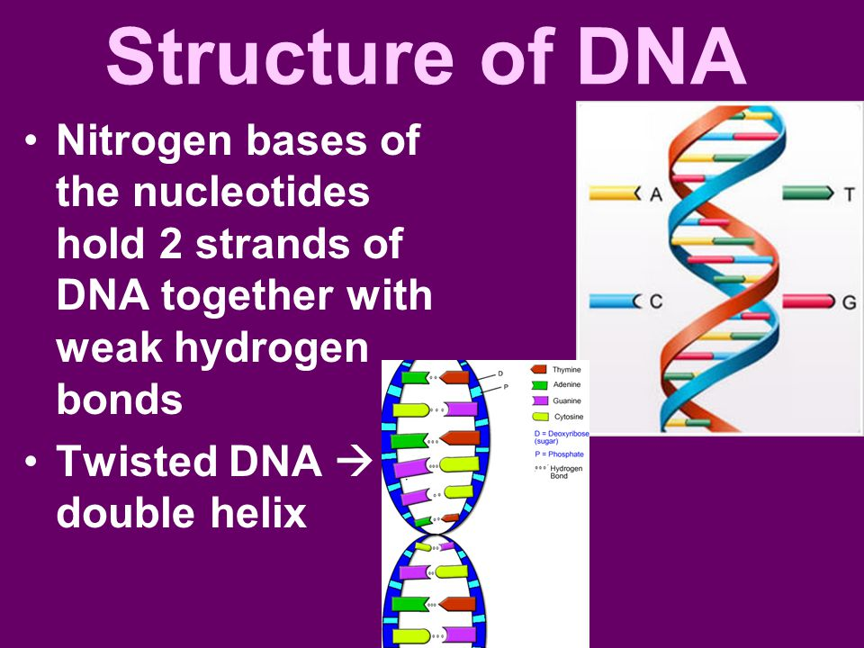 write an essay on molecular structure of dna Link genetic characteristics to dna structure the continuity of life - write an essay explaining the continuity of dna molecule - haruan.