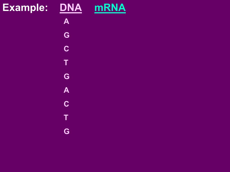 Example: DNA mRNA A G C T