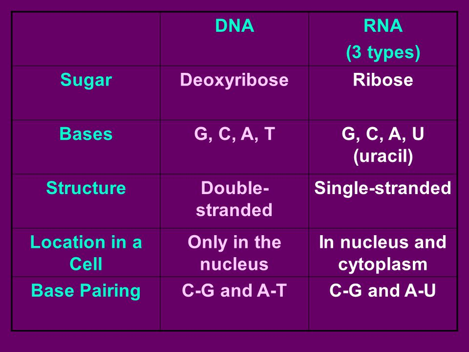 In nucleus and cytoplasm